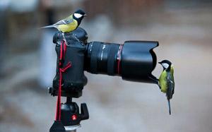 Как стать фотографом с чего начать
