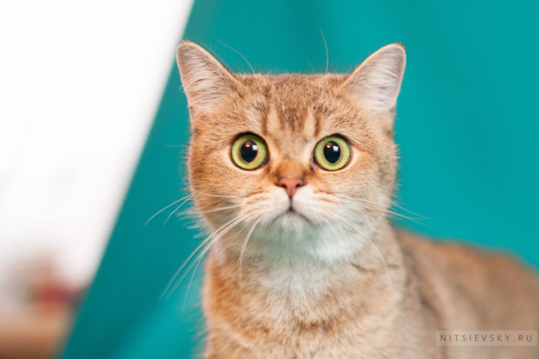 фотосессия с кошками Ростов на дону