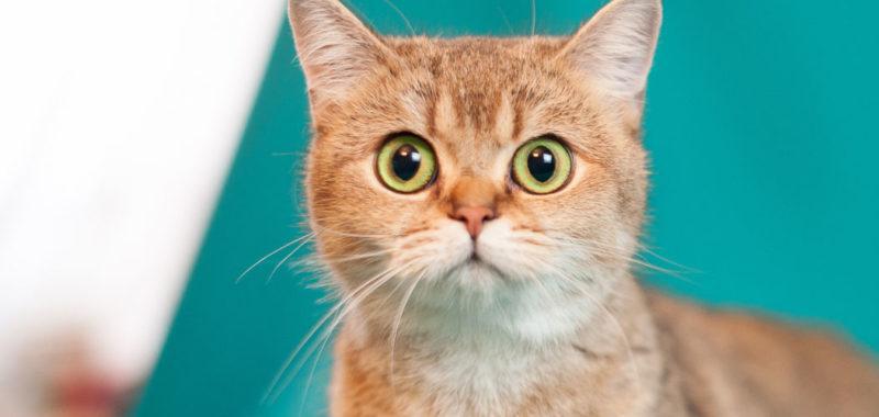 Вы хотите фотосессию с кошками? [Требуется ответ]