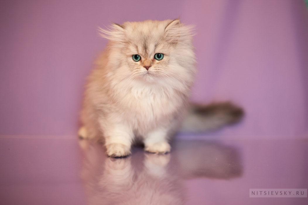 фотосессия с кошками