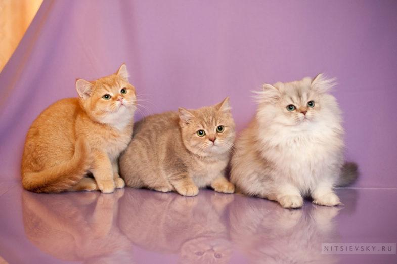 фотосессия с кошками Ростов