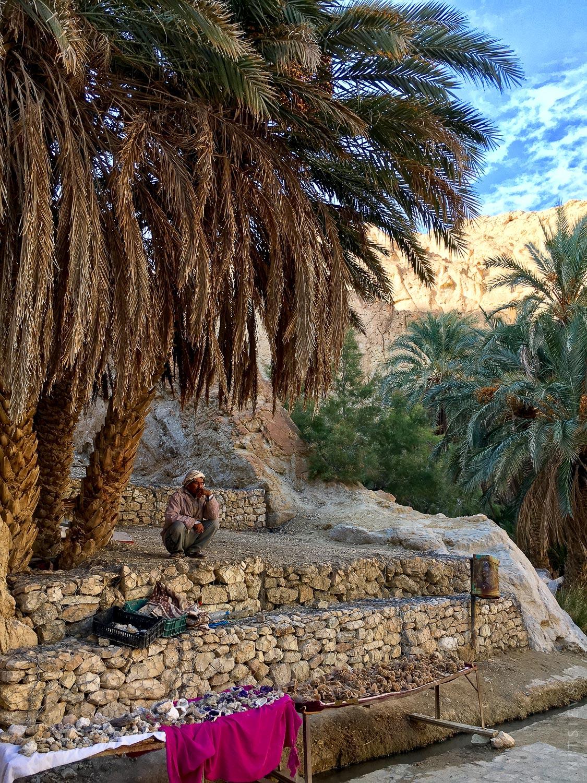 Оазисы в пустыне Сахара